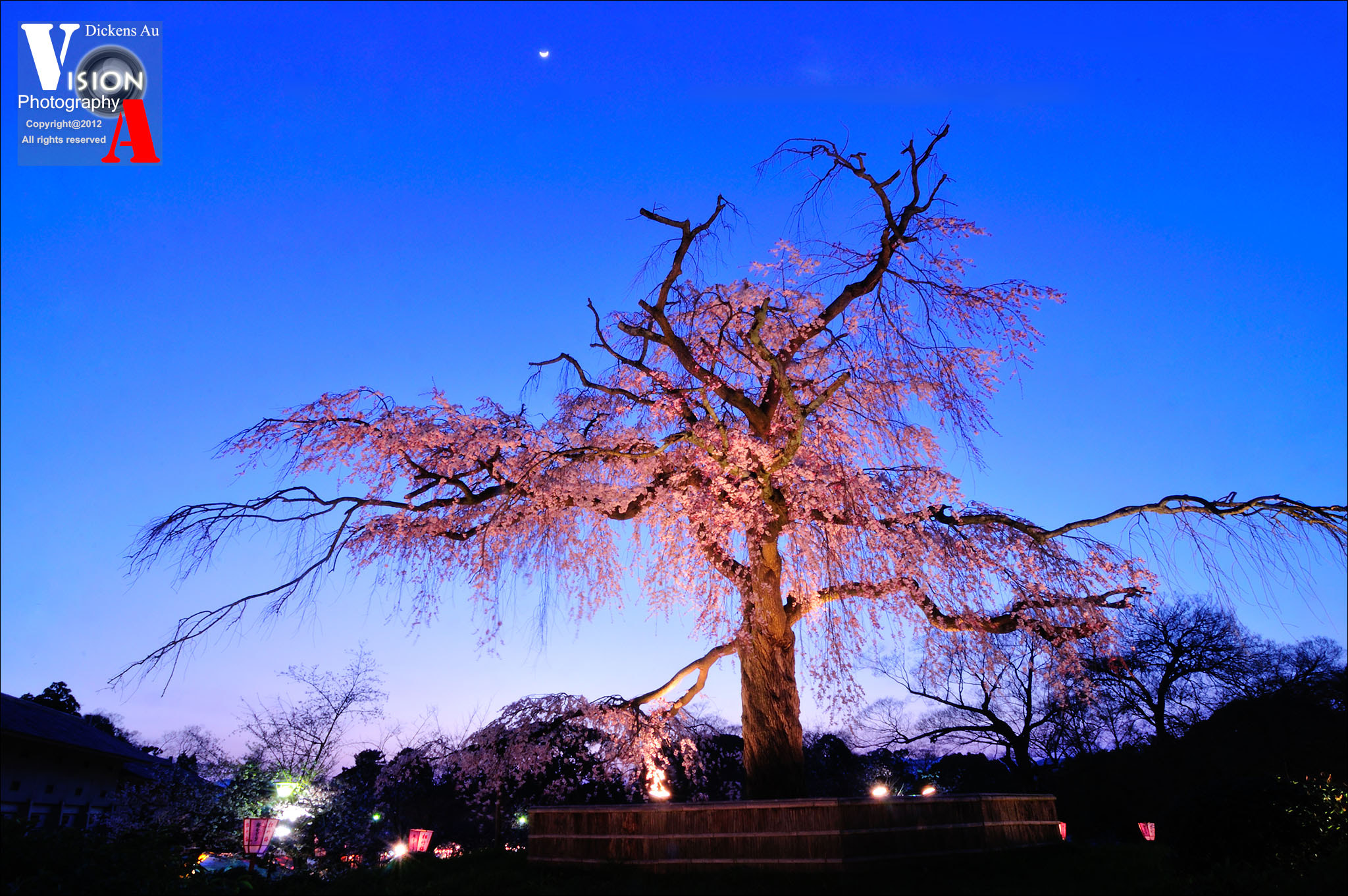 Photograph sakura queen  by Dickens Au on 500px