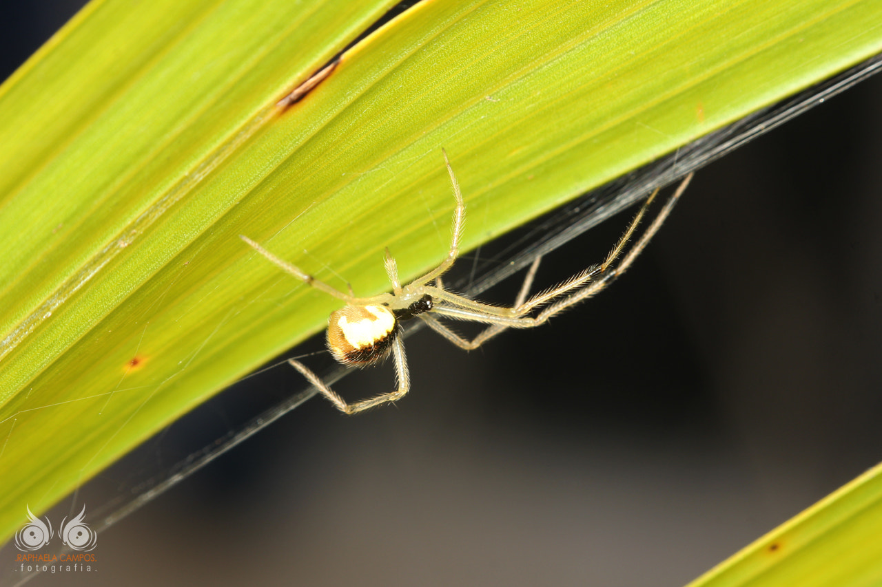 Photograph Spider by Macro Vida on 500px