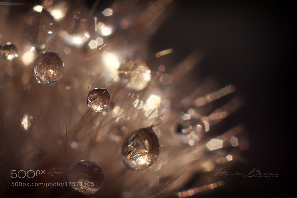 Photograph Morning drops by Bastien HAJDUK on 500px