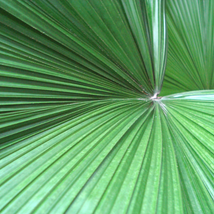 Palm Leaf Abstract, Sony DSC-W120