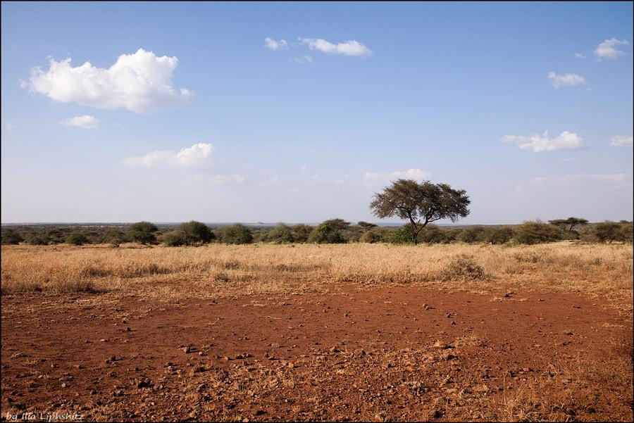 Landscapes of Serengeti №11
