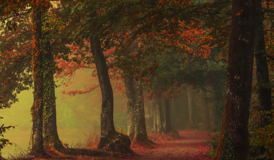 Forest atmosphere! by Patrice Thomas on 500px.com