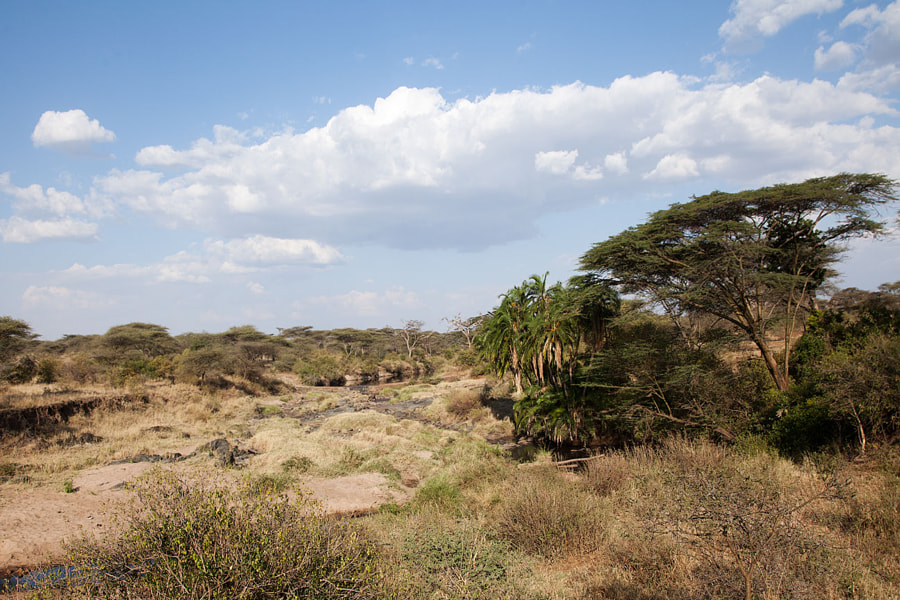 Landscapes of Serengeti №12