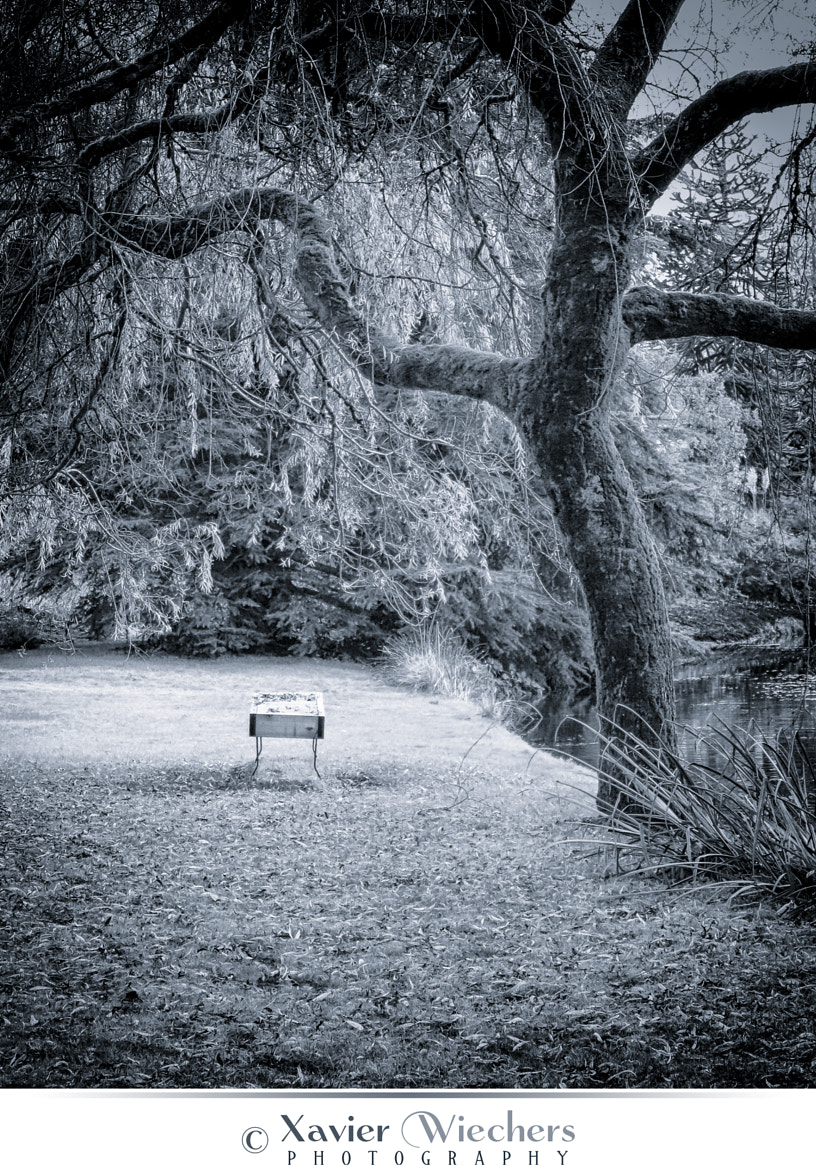 Photograph Frosty Bench by Xavier Wiechers on 500px