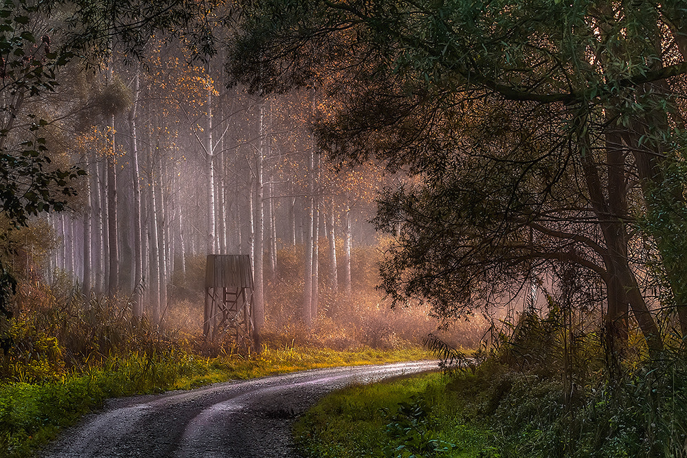 Photograph Tells of the forest by Peter Talos on 500px