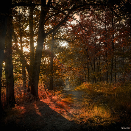 Autumn Floodlit Forest, Canon EOS 5D MARK II, Canon EF 24-70mm f/2.8L