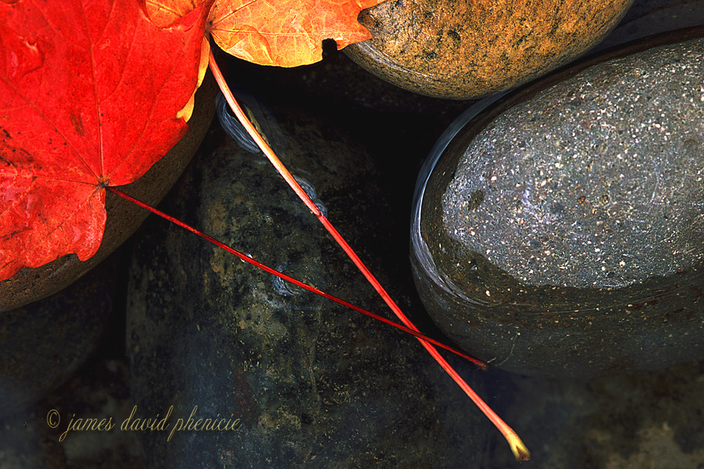 Photograph Rocks and Leaves by James David Phenicie on 500px