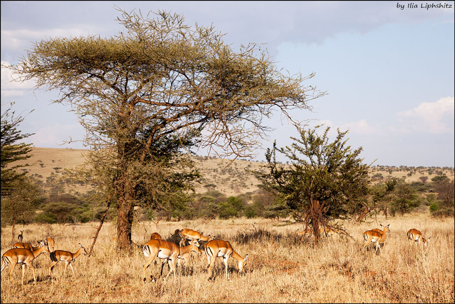 Landscapes of Serengeti №14
