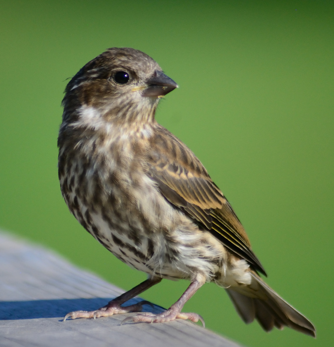 Photograph Little Birdie by Anastasia Hill on 500px