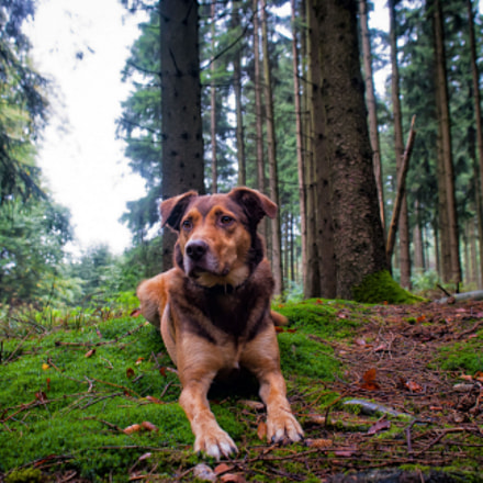 dog in the woods, Nikon D3000, Sigma 18-50mm F2.8-4.5 DC OS HSM