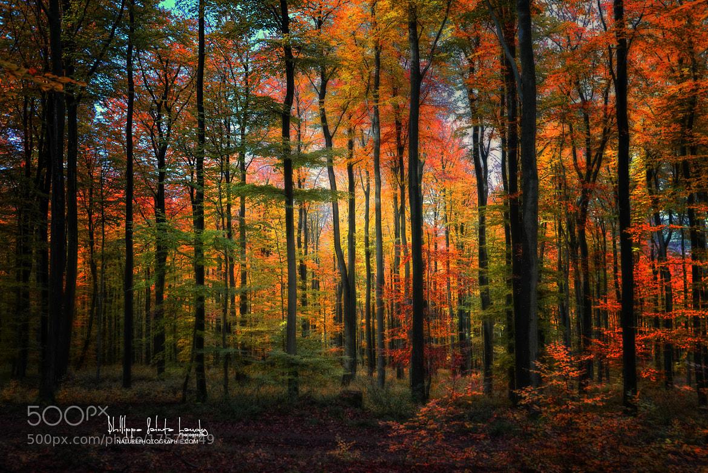Photograph Crayons de couleur by Philippe Sainte-Laudy on 500px