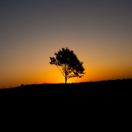Sunrise lonely tree, Canon EOS 1000D, Sigma 18-200mm f/3.5-6.3 DC OS