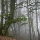 Mientras bajaba del Oketa se echó la niebla que estaba en la cima cubriendo el pequeño bosque de hayas