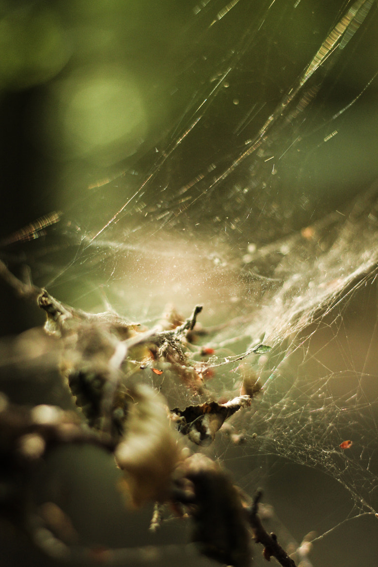 Photograph Littered Cobweb by Florian Schmidt on 500px