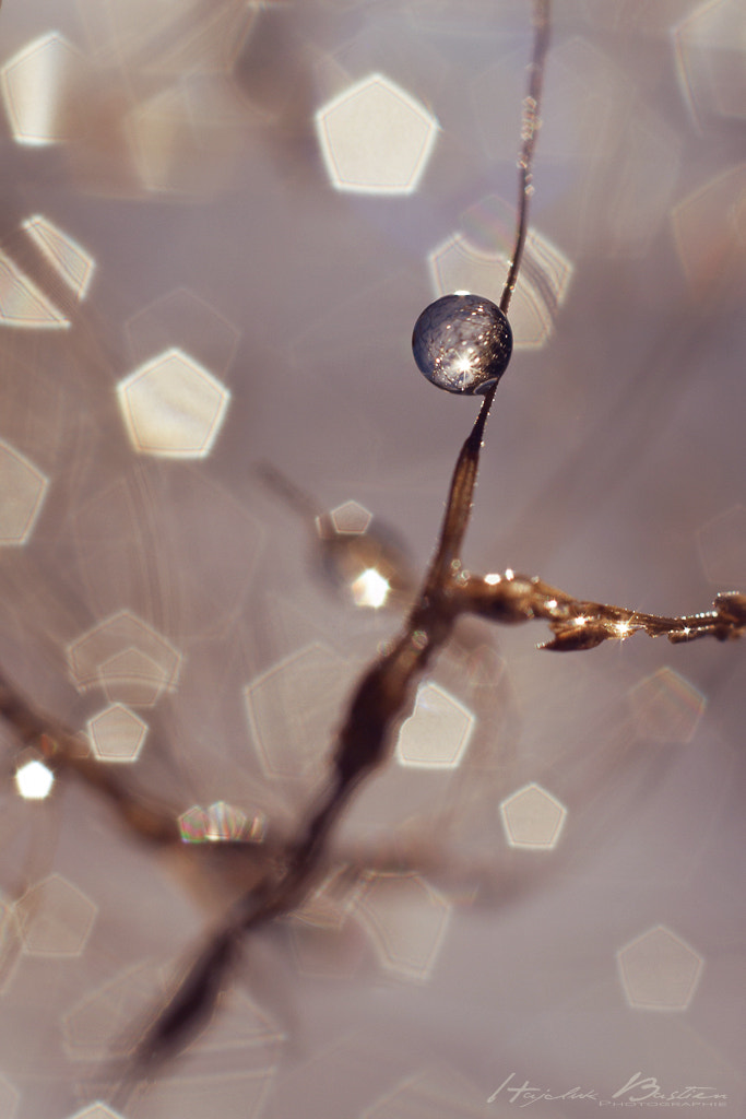 Photograph Cristal ball by Bastien HAJDUK on 500px