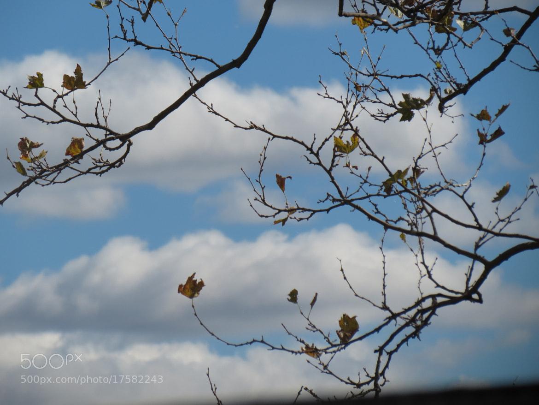 Photograph Sky Blue Sky by Yili Rubio on 500px