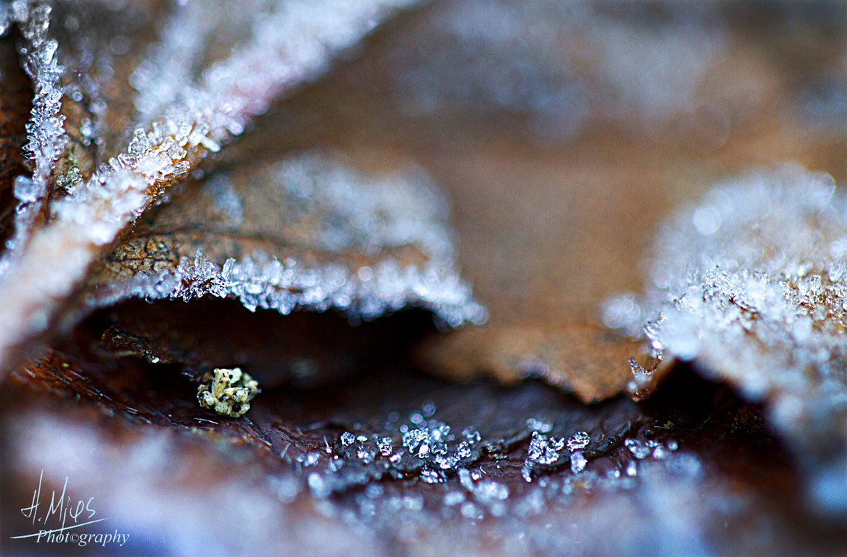 Photograph Diamonds Are Forever... by Helge Mjøs on 500px