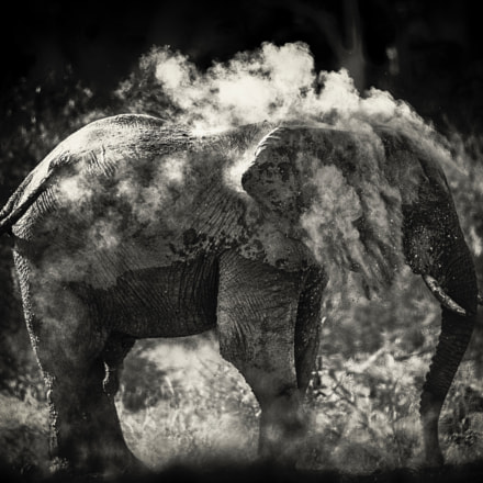 Dust, Canon EOS-1D X, Canon EF 600mm f/4.0L IS II USM