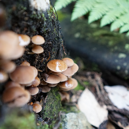 Mushrooms in the sacred, Sony ILCE-6300, Sony E 35mm F1.8 OSS