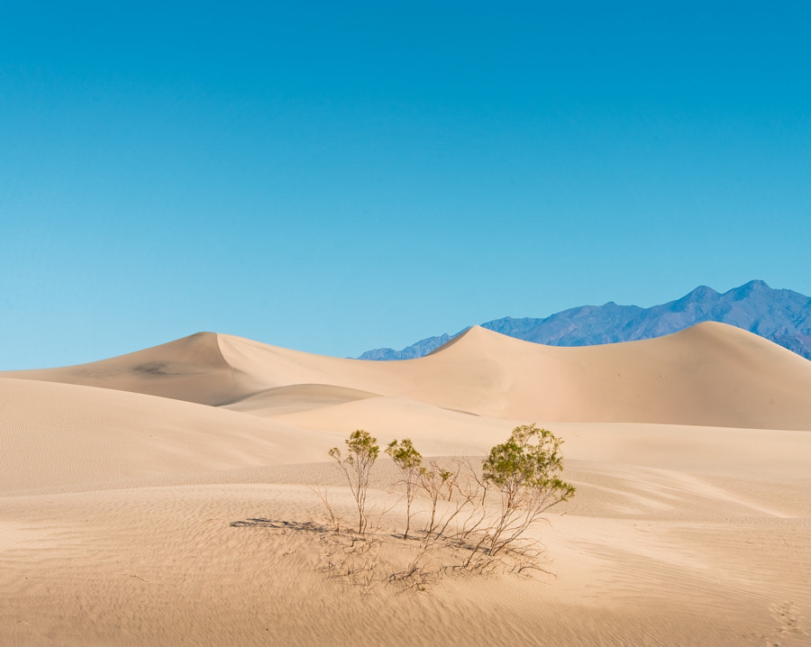 Mesquite Flats Sand Dunes in the Death Valley Nation Park, CA