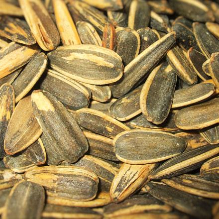 Salted sunflower seeds, Fujifilm FinePix A820