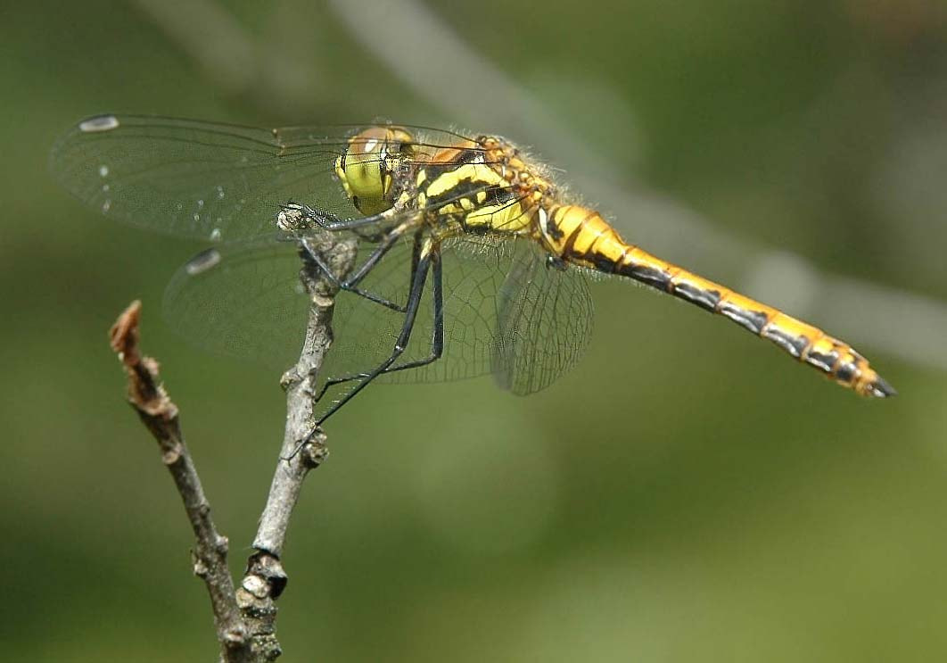 Photograph Dragonfly by Sir Trauti on 500px