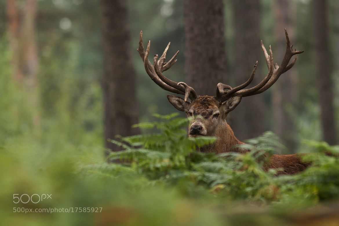 Photograph Stags by Rob Janné on 500px