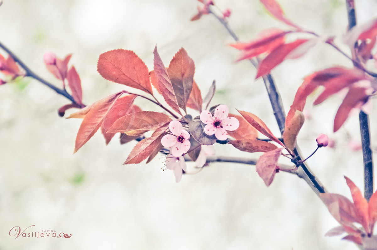 Photograph First Spring by Karina Vasiljeva on 500px