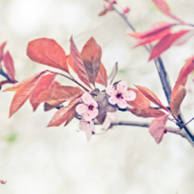 First Spring by Karina Vasiljeva (CristaliaPhoto)) on 500px.com
