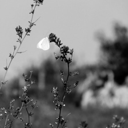 Black and White, Sony DSC-H200