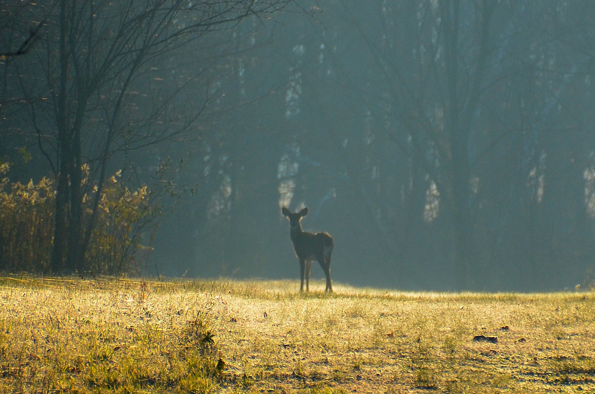 Photograph Morning Deer by Jeff Martin on 500px
