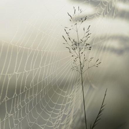 In the mist, Canon EOS 600D, Canon EF 50mm f/2.5 Macro