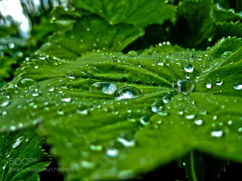 Photograph ... by Nazar Bashutskyy on 500px