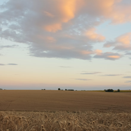 Wheat field before harvest, Canon EOS 600D, Sigma 24-70mm f/2.8 EX