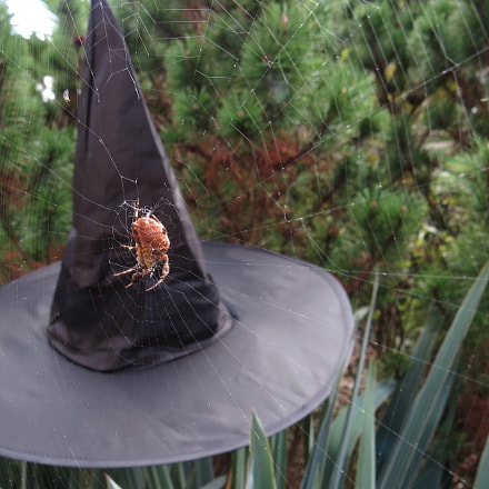 Halloween witch hat with, Canon POWERSHOT SX50 HS