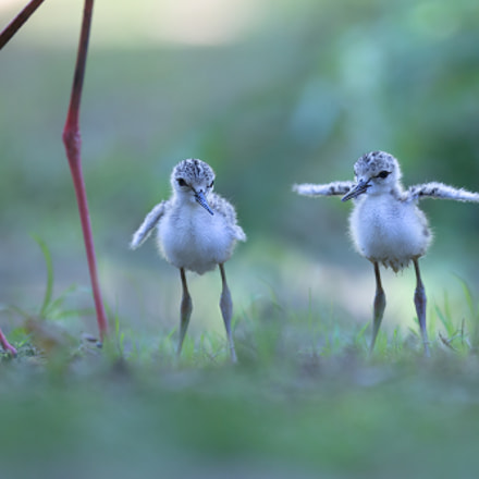 Always together, Canon EOS-1D X, Canon EF 300mm f/2.8L IS