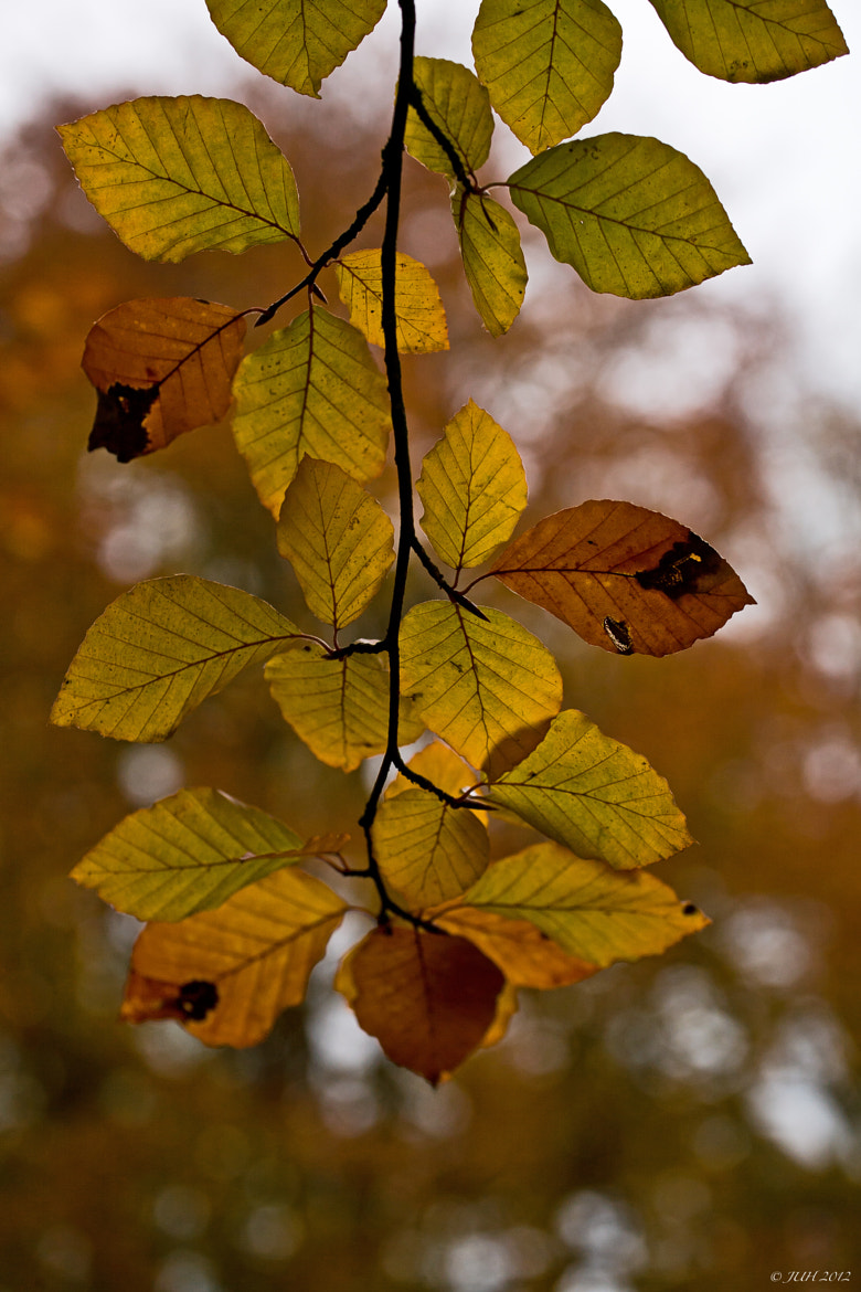 Photograph autumn #3 by Jens-Uwe Hoffmann on 500px