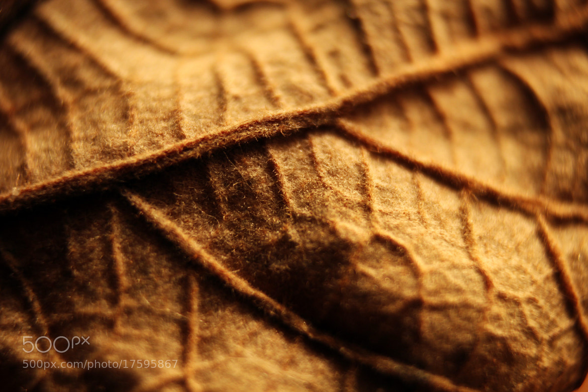 Photograph Dried Veins by Alper Hayreter on 500px