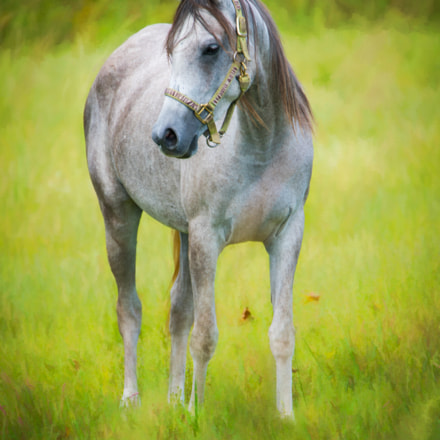 Horse with no Name, Sony ILCE-7RM2, Tamron SP 150-600mm F5-6.3 Di USD