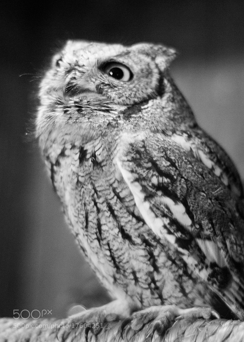 Photograph Wonder Owl by Dylan Brabec on 500px