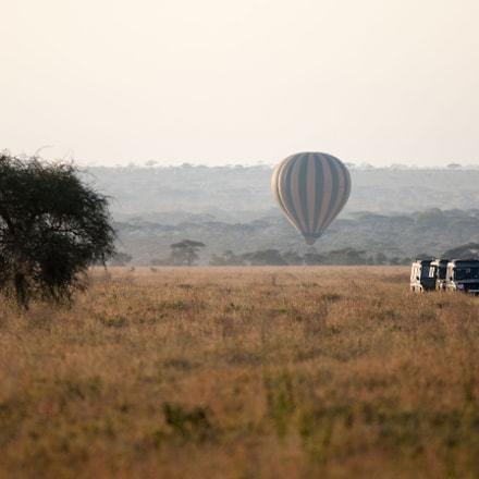 Landscapes of Serengeti №15, Canon EOS-1D MARK III, Canon EF 300mm f/2.8L IS