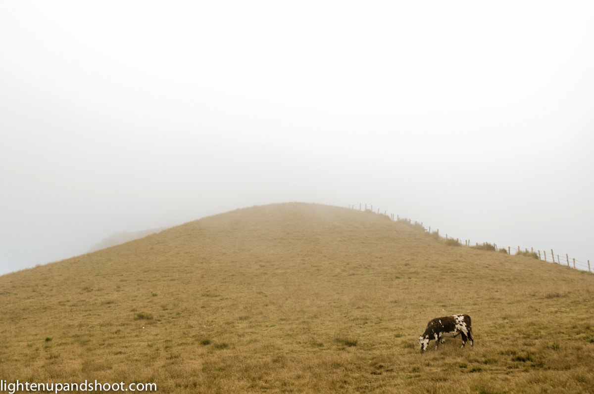 Photograph cow in Nevado del Ruiz by michael thompson on 500px