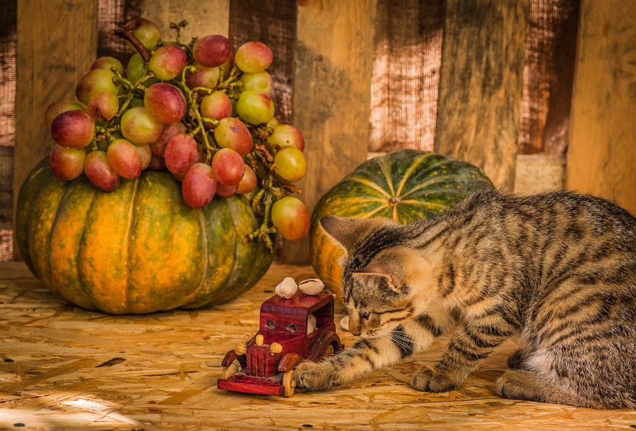 500px.comのLyudmila LucienneさんによるAn unexpected participant still life :)