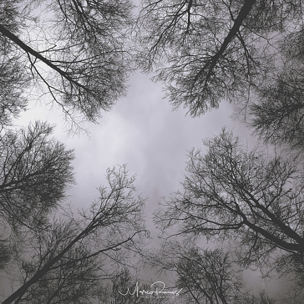 Forest Perspectives, Canon EOS 5D MARK III, Canon EF 24-70mm f/4L IS USM