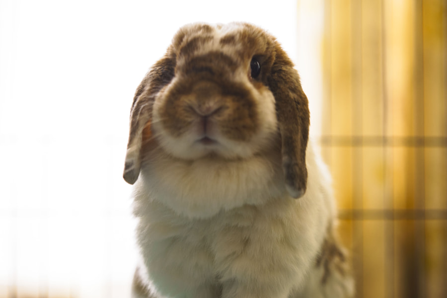 My bun portrait by Hiro _L on 500px.com