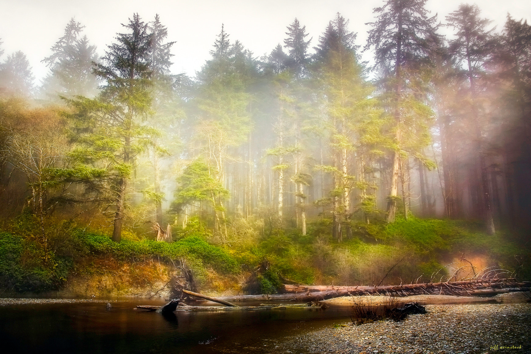 Photograph The Rain Forest by Jeff Weinstock on 500px