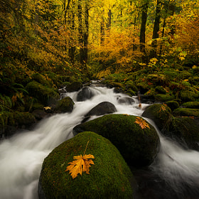 Dry Creek Glow by Joel Brady-Power (joelbrady-power)) on 500px.com