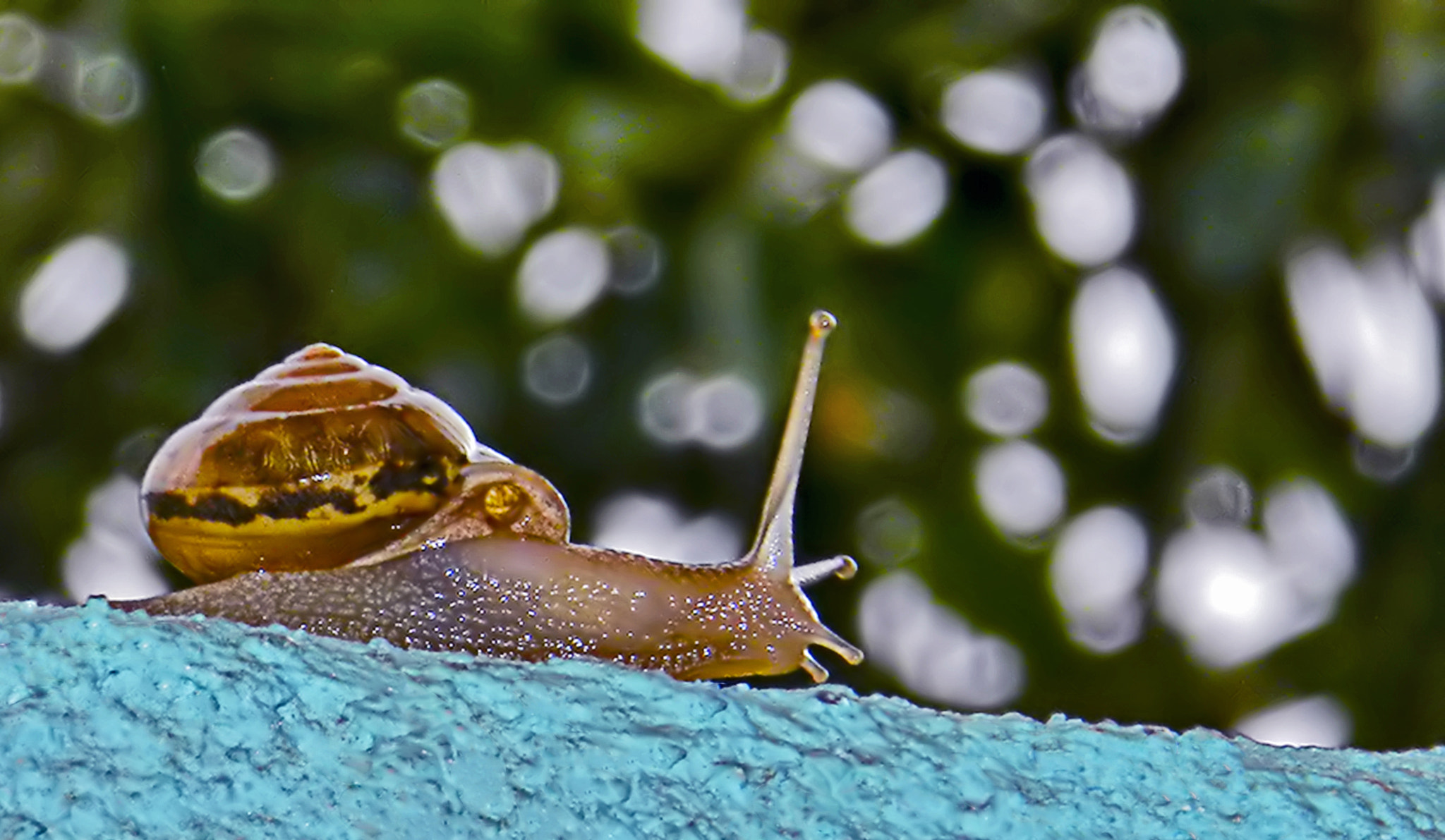 Photograph Snail by  Soli Rocha on 500px