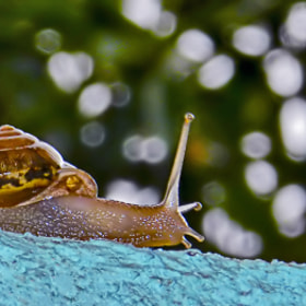 Snail by  Soli Rocha (soli_rocha)) on 500px.com