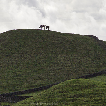 Horses, Canon EOS 600D, Canon EF-S 55-250mm f/4-5.6 IS